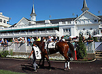 May 31, 2014: Jasizzle in the paddock before the G3 Aristides Stakes, Churchill Downs.  He is owned and trained by Tommy Mills and ridden by Robby Albarado. Mary M. Meek/ESW/CSM