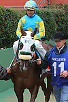February 22, 2015: #11 Mr. Z with jockey Corey Nakatani aboard coming from the paddock area at Oaklawn Park in Hot Springs, AR. Justin Manning/ESW/CSM