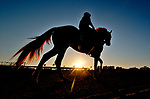 January 22, 2020: A horse enters the track at sunrise as horses prepare for the Pegasus World Cup Invitational at Gulfstream Park Race Track in Hallandale Beach, Florida. Scott Serio/Eclipse Sportswire/CSM