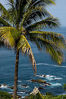 A palm tree stands atop a hillside overlooking the Pacific Ocean off the coast of Ixtapia, Mexico. PHOTOS BY: PATRICK SCHNEIDER PHOTO.COM