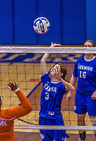 2 November 2014: Yeshiva University Maccabee Middle Blocker Shana Wolfstein, a Senior from Burlington,VT, in action against the Purchase College Panthers at SUNY Purchase College, in Purchase, NY. The Maccabees defeated the Panthers 3-1 in the NCAA Division III Women's Volleyball Skyline matchup. Wolfstein ended her 2014 season with 17 Kills, 56 Digs, 3 Blocks and 5 Aces for the Lady Macs. Mandatory Credit: Ed Wolfstein Photo *** RAW (NEF) Image File Available ***
