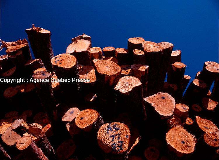 File Photo of freshly  cut canadian wood lumber in St-Michel-des-Saints in Northen Quebec, CANADA<br /> <br /> PHOTO : Agence Quebec Presse