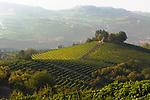 Italien, Piemont, Langhe: Weinberge bei Castiglione Falletto | Italy, Piedmont, Langhe: vineyards near Castiglione Falletto