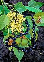 Kukui nut lei, nuts and leaves