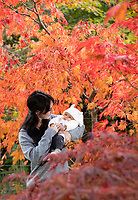 BNPS.co.uk (01202) 558833. <br /> Pic: CorinMesser/BNPS<br /> <br /> Pictured: Alice Skinner shows her daughter the colours of the acer palatum omureyama trees. <br /> <br /> Amazing autumn... <br /> <br /> Specialist growers of Japanese maple trees Barthelemy & Co have well and truly seen autumn arrive at their business in Stapehill near Wimborne Dorset.