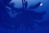 Reflection of moon and palm tree in a coastal pond along the South Kohala coast