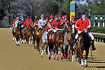 Jan.21, 2013 - Hot Springs, Arkansas, U.S -  The field in Post Parade for the 4th race Saturday afternoon at Oaklawn Park.  (Credit Image: © Jimmy Jones/Eclipse/ZUMAPRESS.com)