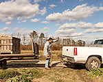December 30, 2016. Rose Hill, North Carolina.<br /> <br /> John Dunn hitches a trailer full of rutabagas to a truck on a field owned by Cottles Organics, a farm where he has worked since he was a child.<br />  <br /> John Dunn, age 19, is currently a freshman at NC State University and is the first person in his family to go to college. With a combination of grants, loans, help from his grandfather and weekend farm work, Dunn hopes to find finish college and find a career in agriculture.<br /> <br />  Colleges and universities, which are always trying to pinpoint an under-served and sometimes underprivileged populations of students, have noted a decline in students from rural areas of the country. There are various efforts underway in colleges and universities to identify more of these kids and get them enrolled.
