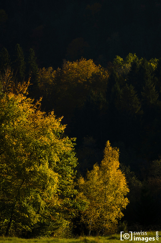 Autumn trees view