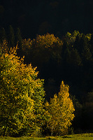 Autumn trees view