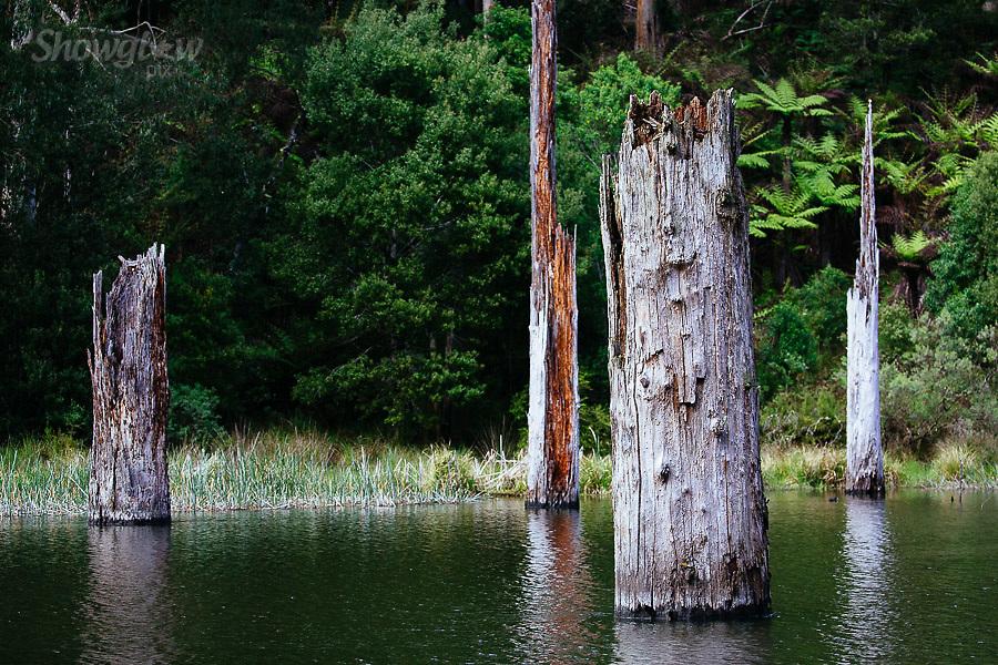 Image Ref: CA584<br /> Location: Lake Elizabeth, Forrest<br /> Date of Shot: 20.10.18