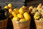 Acorn, spaghetti,and festival squash in bushel baskets, Zacherl's Farm Market, Route 23
