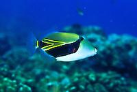 State fish - Humuhumunukunukuapuaa