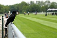 15th May 2020, Muenchen-Riem racecourse, Munich, Germany. Flat racing; A bird sits on the rails as the only spectator