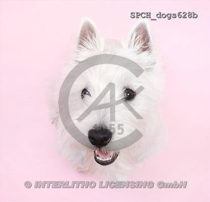 Xavier, ANIMALS, dogs, photos(SPCHdogs628b,#A#) Hunde, perros
