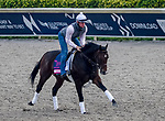 January 23, 2020: Omaha Beach jogs on the main track as horses prepare for the Pegasus World Cup Invitational at Gulfstream Park Race Track in Hallandale Beach, Florida. John Voorhees/Eclipse Sportswire/CSM