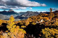 Views from tops near Rocks Hut on Pelarus Track in Mount Richmond Forest Park near Nelson, Nelson Region, New Zealand