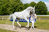 GBR-Tia Barlow presents Barnaboy Ambassador during the First Horse Inspection for the CCI-L2* Section D.  2019 GBR-Saracen Horse Feeds Houghton International Horse Trial. Wednesday 22 May. Copyright Photo: Libby Law Photography