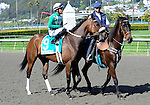 10 April 10: Red Sun in the post parade before the grade 2 San Francisco Mile Stakes for four year olds and upward at Golden Gate Fields in Berkeley, California.
