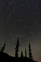Star trails and the aurora borealis over silhouetted spruce trees in the Brooks Range mountains, Arctic Alaska.