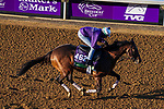 November 3, 2020: Raging Bull, trained by trainer Chad C. Brown, exercises in preparation for the Breeders' Cup Mile at Keeneland Racetrack in Lexington, Kentucky on November 3, 2020. John Voorhees/Eclipse Sportswire/Breeders Cup/CSM