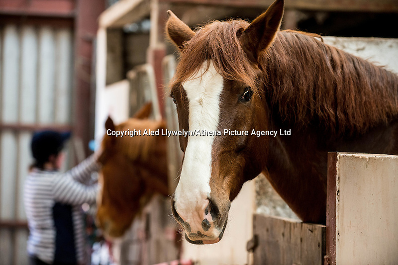 FAO Laura Lean.<br /> Friday 20 January 2017<br /> Pictured: Horses in the stables <br /> Re: Sue Scourfield's riding school is  being hit by increasing business rates.