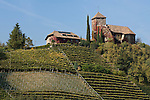 Italy, South tyrol (Alto Adige) Eppan, below district St. Pauls is Castle Warth surrounded by vineyards and apple trees at the South Tyrolean Wine Route and Eppan Castle Route