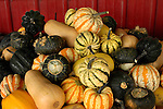 Squash assortment, Zacherl's Farm Market, Route 23