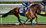 October 27, 2014:  One Lucky Dane, trained by Bob Baffert, exercises in preparation for the Sentient Jet Breeders' Cup Juvenile at Santa Anita Race Course in Arcadia, California on October 27, 2014. Scott Serio/ESW/CSM
