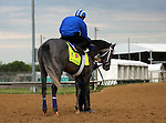 LOUISVILLE, KY - MAY 04: Kentucky Derby hopeful Mohaymen (Tapit x Justwhistledixie, by Dixie Union) waits on track at Churchill Downs, Louisville KY, with exercise rider Miguel Jaime. Owner Shadwell Stable, trainer Kieran P. McLaughlin. (Photo by Mary M. Meek/Eclipse Sportswire/Getty Images)