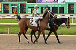 January 16, 2016: Streets of Gold with Robby Albarado up in the Marie G. Krantz Memorial Stakes race at the Fairground race coursin New Orleans Louisiana. Steve Dalmado/ESW/CSM