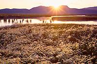Foxtail grass, Ruby Marsh <br />   and Maverick Springs Range<br /> Ruby Lake National Wildlife Refuge<br /> Great Basin,  Nevada