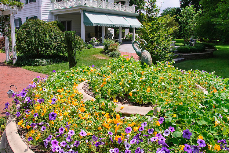 Traditional white House in colonial style, annua; heirloom and old-fashioned flowers of nasturtiums Tropaeoleum, petunias, blue skies, clouds, sunny summer day, bird ornament statutes, trellis