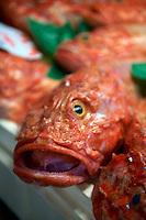Scorfano or Scorpionfish - Venice Rialto Fish Market