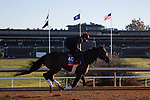 November 4, 2020: Civil Union, trained by trainer Claude R. McGaughey III, exercises in preparation for the Breeders' Cup Filly & Mare Turf at Keeneland Racetrack in Lexington, Kentucky on November 4, 2020. Gabriella Audi/Eclipse Sportswire/Breeder's Cup/CSM