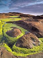 Sea Grass and ocean. Smelt Sands State Park, Oregon