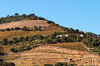 vineyards quinta do infantado douro portugal