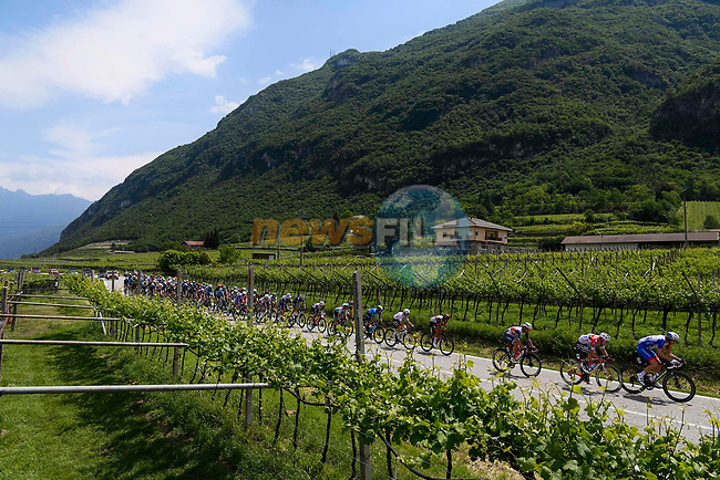 The peloton race through the vineyards during Stage 18 of the 2021 Giro d'Italia, running 231km from Rovereto to Stradella, Italy. 27th May 2021.  <br /> Picture: LaPresse/Fabio Ferrari | Cyclefile<br /> <br /> All photos usage must carry mandatory copyright credit (© Cyclefile | LaPresse/Fabio Ferrari)
