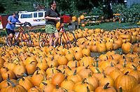 Colheita de abobora em Montpelier, Vermont. USA. 2003. Foto de Vinicius Romanini