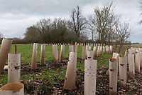 29-1-2021 New hedge plants <br /> ©Tim Scrivener Photographer 07850 303986<br />      ....Covering Agriculture In The UK....