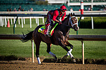 LOUISVILLE, KY - MAY 02: Classic Empire, with exercise rider Martin Rivera, gallops at Churchill Downs on May 02, 2017 in Louisville, Kentucky. (Photo by Alex Evers/Eclipse Sportswire/Getty Images)