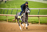 LOUISVILLE, KY - MAY 04: Destin gallops in preparation for the Kentucky Derby at Churchill Downs on May 04, 2016 in Louisville, Kentucky.(Photo by Alex Evers/Eclipse Sportswire/Getty Images)