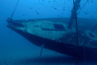 Fish swimming around the hull of the Le Voilier shipwreck underwater, La Ciotat, France.