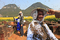 The secret of the bee beard. Put the queens from several hives in cages. Attach the cages of queens around the beekeeper's neck, then let the assistants cover him with bees. The bees are tranquil. They join their queen as though the colony had decided to swarm (i.e. to leave one hive to colonize a new habitat). Mister Yang Chuan will still be stung several times in the face and this magic trick is not recommended for novices.