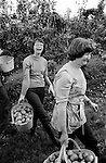 1970S SEASONAL CASUAL FARM WORK THE FENS UK