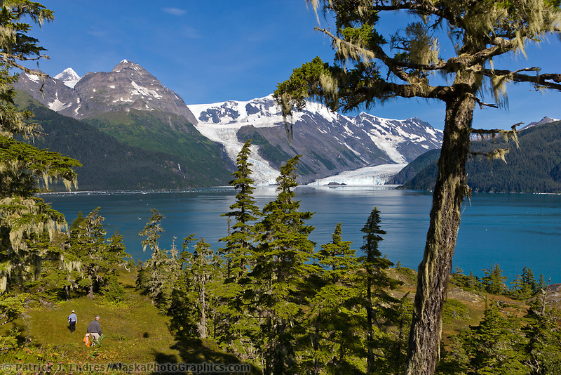 Old growth Western Hemlock trees, Chugach mountains, Cascade and Barry glaciers flow into Barry Arm, Chugach National Forest, Prince William Sound, Alaska.