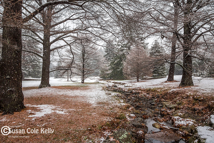 Larches over Bussey Brook at the Arnold Arboretum in the Jamaica Plain neighborhood, Boston, Massachusetts, USA