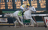 Tail flying, streaks across the wire in he Gotham Stakes like white lightning.