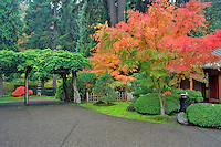 Pathway and fall color at Japanese Gardens. Portland. Oregon