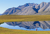 Hiker views the Endicott Mountains, situated in the Gates of the Arctic National Park, reflecting in a lake in the Brooks Range, Arctic, Alaska